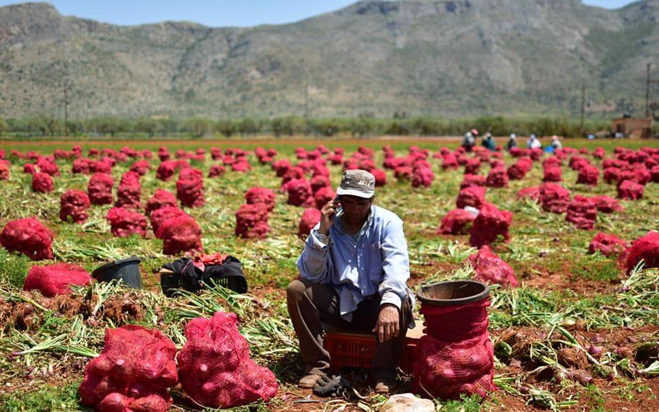 Κοινή δήλωση ΝΑΡ – Organizata Politike για τους εργάτες γης
